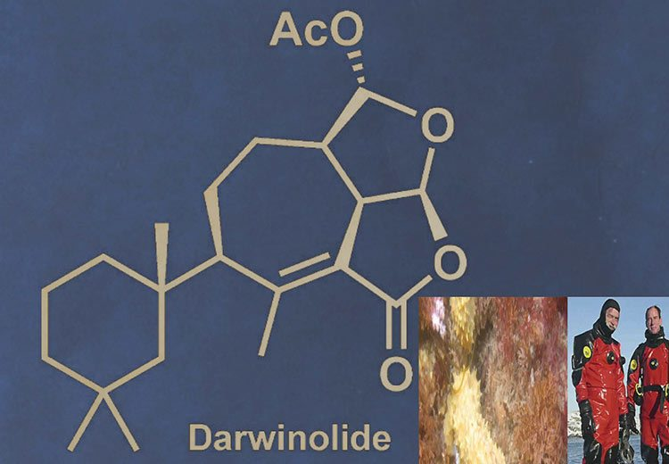 Darwinolide from Antarctic Sponge Is Key to Treating MRSA I Science Technology and Lifestyle I SciTechLifestyle.com
